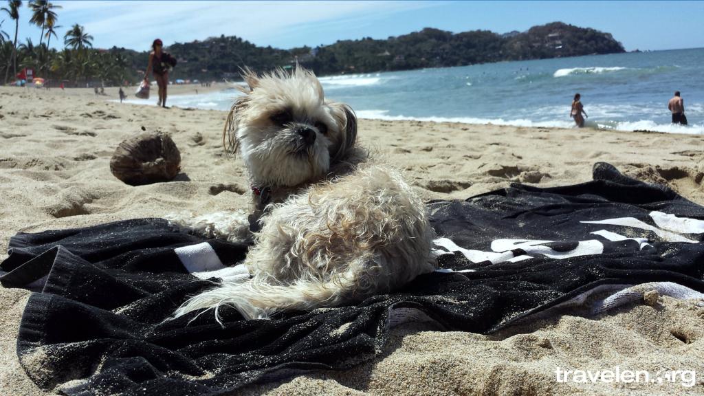 Sophie the Beach Bum